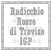 Radicchio Rosso di Treviso I.G.P.